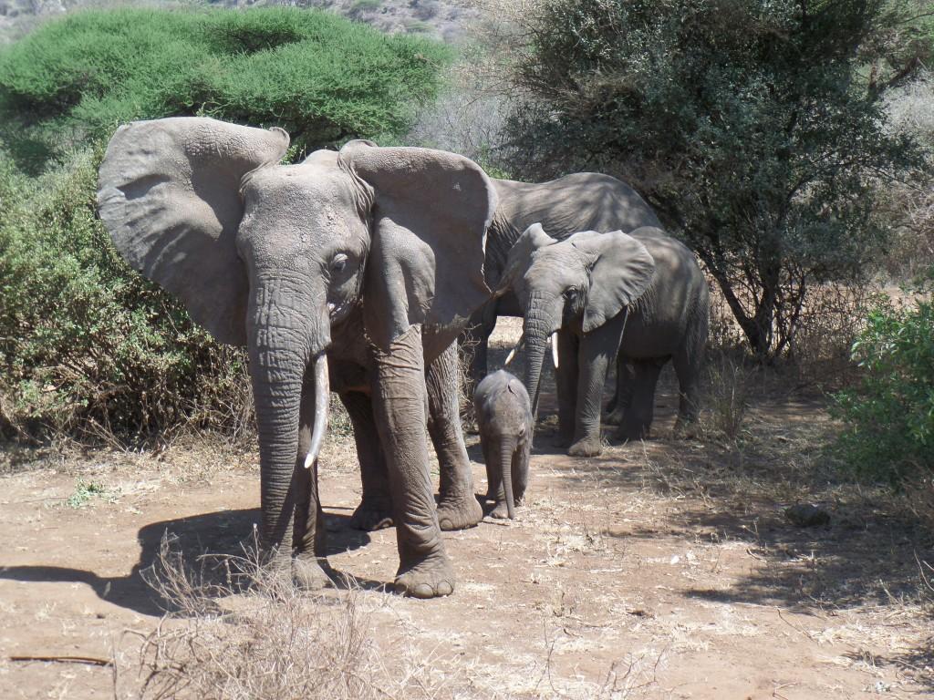 Elephant Safari Lake Manyara