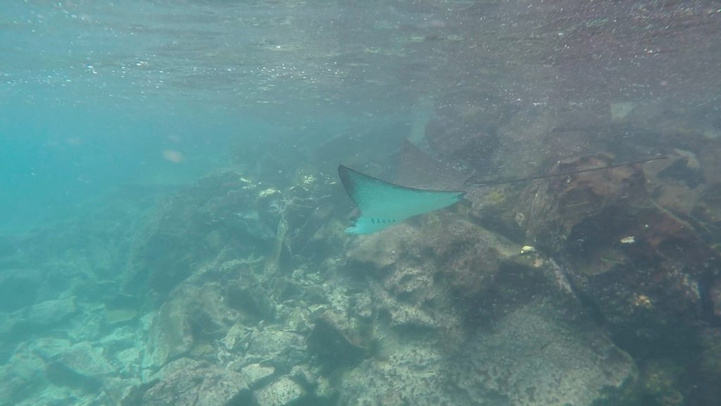 "I don't know what we loved more. Having an Eagle Ray float by us or the Kids singing ""Oh Let's Name the Zone"" from Finding Nemo on the way back. So far above everything else, being in the moment in the Galapagos has been one of those true chances of a lifetime kind of gifts."