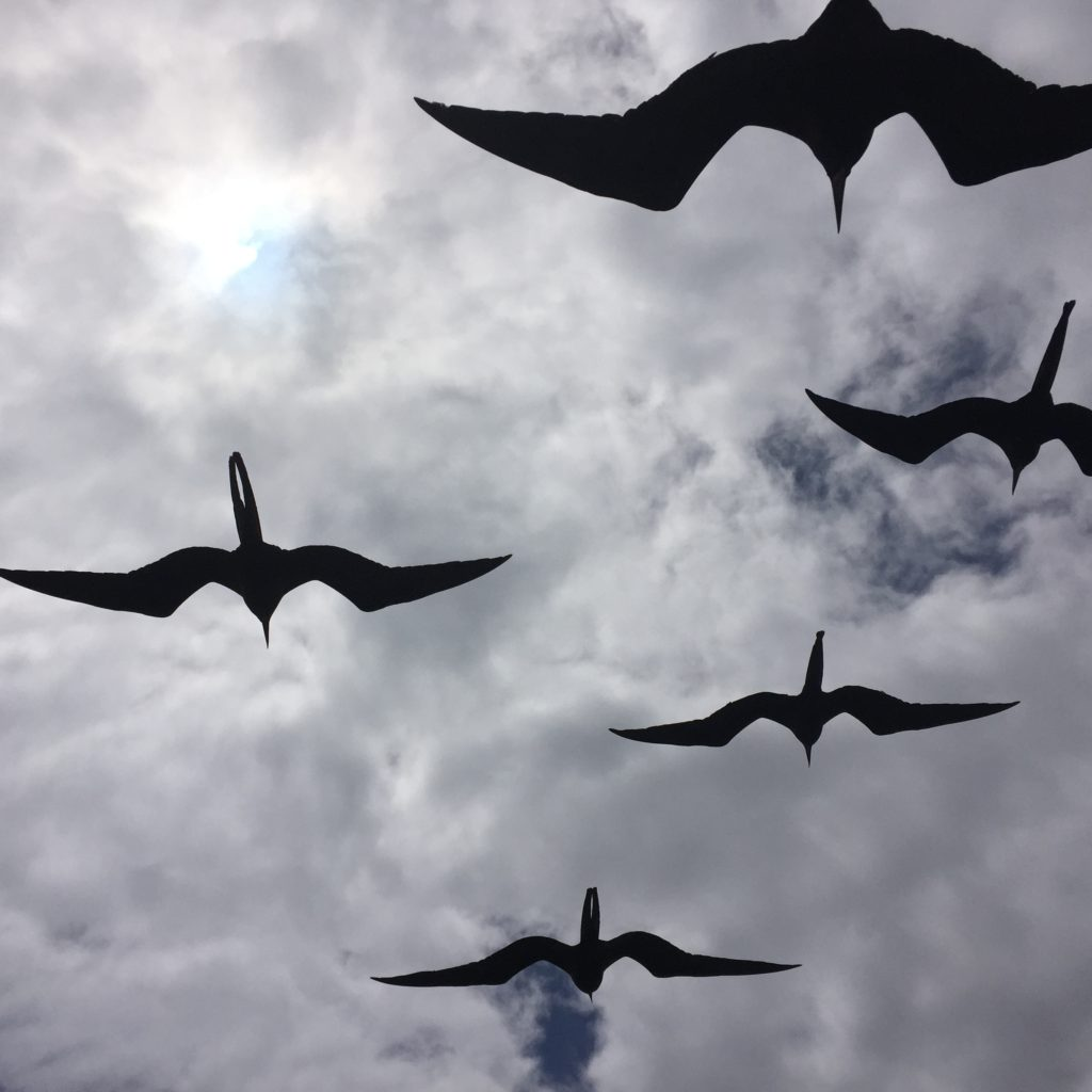 Having Frigate birds soaring only a few feet away had us all choked up